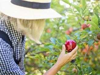 Ovocnáři očekávají nižší úrodu - ilustrační foto.