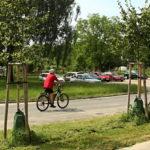 O závlahu stromů v suchém létě se v Uherském Hradišti postarají speciální vaky