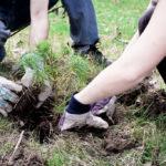Zapojte se do obnovy Lesů, vyzývají Lesy ČR. Připravují celostátní akci