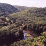 Kvůli kácení uschlých stromů se dočasně uzavřou některé trasy v NP Podyjí