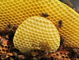 Včely med