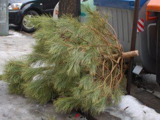 Zlín svoz vánočních stromků