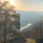 Znojemští lesníci ukážou rozsah kůrovcové kalamity i obnovu lesa