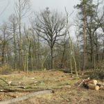 V Podyjí se čistí les a odstraňují nebezpečné stromy. Lidé se mohou zapojit
