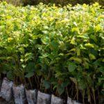 Ve Znojmě se chystá sázení tisíců stromů. Do obnovy lesa se může zapojit každý