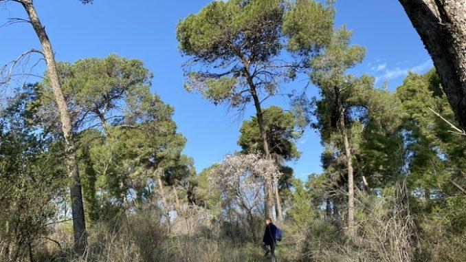 masarykuv les Kibuc