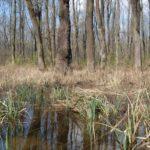 Lužním lesům pomohlo další zaplavení, tentokrát z řeky Moravy