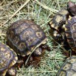 Zlínská zoo hlásí osm vzácných želvích přírůstků
