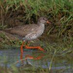 Odvodňování mokřadů ohrožuje vzácné ptáky i celou krajinu, varují ornitologové
