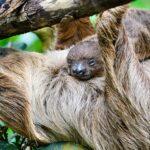 Zlínská zoo od 25. května otevírá vnitřní pavilony, nabídne také on-line vstupenky za velmi zvýhodněnou cenu