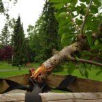Zničili nově vysazené stromy. Útok vandalů řeší policie