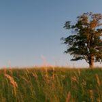 Vybírá se strom roku, Morava a Slezsko mají pět zástupců