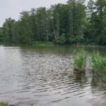 Lesníci obnovili velký mokřad na jihu Moravy. Zadrží vodu v krajině