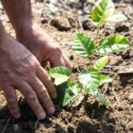 Ve Znojmě obnoví les zničený suchem a kůrovcem. Akci pro veřejnost původně zrušili