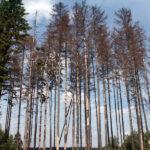 Přednost před spory dostala obnova lesů. Lesy ČR spolupracují s Hnutím Duha