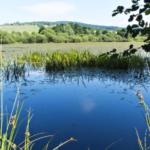 Nová přírodní rezervace na severozápadě Moravy chrání významné mokřiny