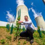 Největší jaderná vinice na světě roste u Jaderné elektrárny Dukovany