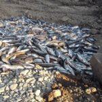 Kvůli chemikálii uhynuly tuny ryb v Bečvě. Na místě zasahují hasiči