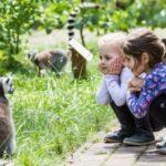 Vstup do ostravské zoo bude dva měsíce zdarma