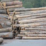Počasí pomáhá lesníkům proti kůrovci, získali drahocenný čas