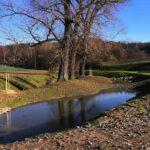 Knínickému potoku vrátili přírodní charakter. Jeho součástí je opět soustava říčních oblouků, mokřadů a tůní
