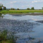 Vznikající ptačí park na jihu Moravy skrýval brouka, kterého už považovali za vyhynulého