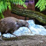 Půjčte si na víkend zvíře, láká zlínská zoo. Rozbíhá nový projekt na podporu zahrady