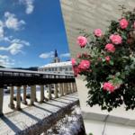 Na zámcích v Lysicích a Rájci právě rozkvétají kamélie. Letos zůstanou návštěvníkům skryty