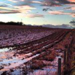 Sucho zemědělcům na jaře nehrozí. Morava je na tom s podzemní vodou překvapivě lépe než Čechy