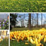 Frýdek-Místek zaplaví desetitisíce květů, mají potěšit a zkrášlit ulice