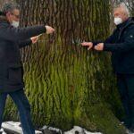 Olomoucký Král je v dobré kondici. Obvod památného dubu měří přes pět metrů