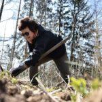 U Moravského Berouna roste nový les, odolá suchu i kůrovci