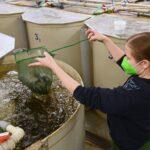 Zvýšená teplota vody povede k vyhynutí některých druhů ryb. Vědci hledají nové cesty