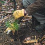 Lesníci začali vysazovat orientální druhy, připravují se na klimatickou změnu