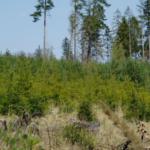 Zalesníme největší plochu v historii, slibují Lesy ČR