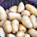 Jak ekologicky chránit brambory před nemocemi? Vědci zkoumají možnosti