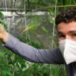 VIDO: Robot umí sám ošetřit rostliny, na vývoji se podíleli brněnští vědci