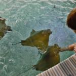 Přehledně: Zoo otevírají pavilony, podívejte se kde