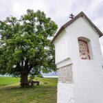 Začíná hlasování o Strom roku. V anketě soutěží pět stromů z Moravy a Slezska