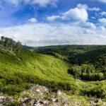 Mění se lesy i přístup lesníků. Musíme respektovat přírodu, říká odborník