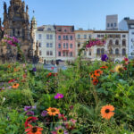 Květinová výzdoba opět zkrášlila centrum Olomouce