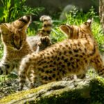 VIDEO: Ostravská zoo hlásí dva roztomilé přírůstky