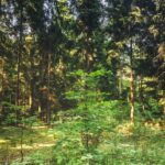 Lesy se postupně zotavují, ubylo kůrovce i sucha