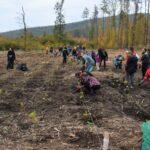 Zapojte se do obnovy lesů! Chystá se další celostátní akce